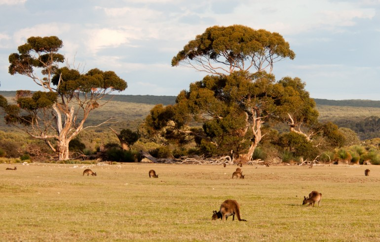 The ACE-FX Australia Travel Guide P.3: Southern Australia