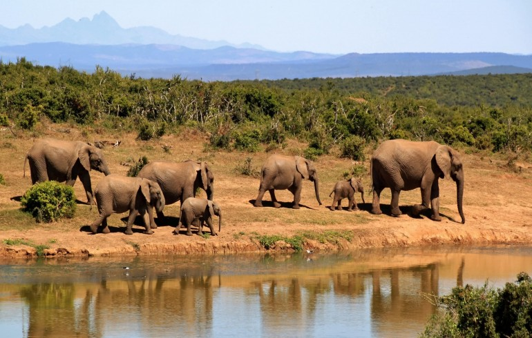 ACE-FX Travel Guide: Exploring South Africa